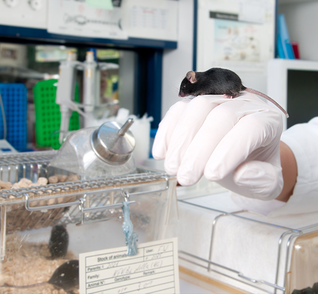 Laboratory Animal Research Facilities